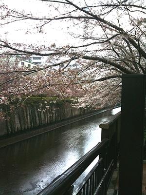 Sakura100329_3